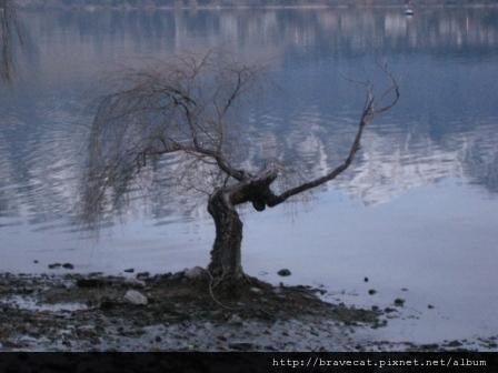 IMG_2621 巫婆樹