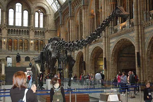 位於中庭的恐龍化石