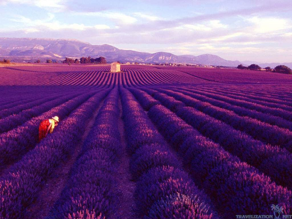 Travel-Mondays-Lavender-Fields-in-Provence-France6