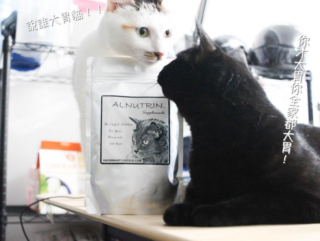 Alnutrin兩貓加字.jpg