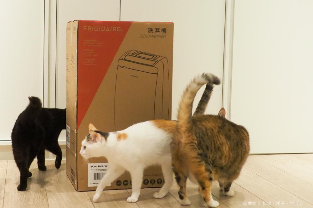 三貓開箱.jpg