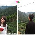 茶園10.jpg