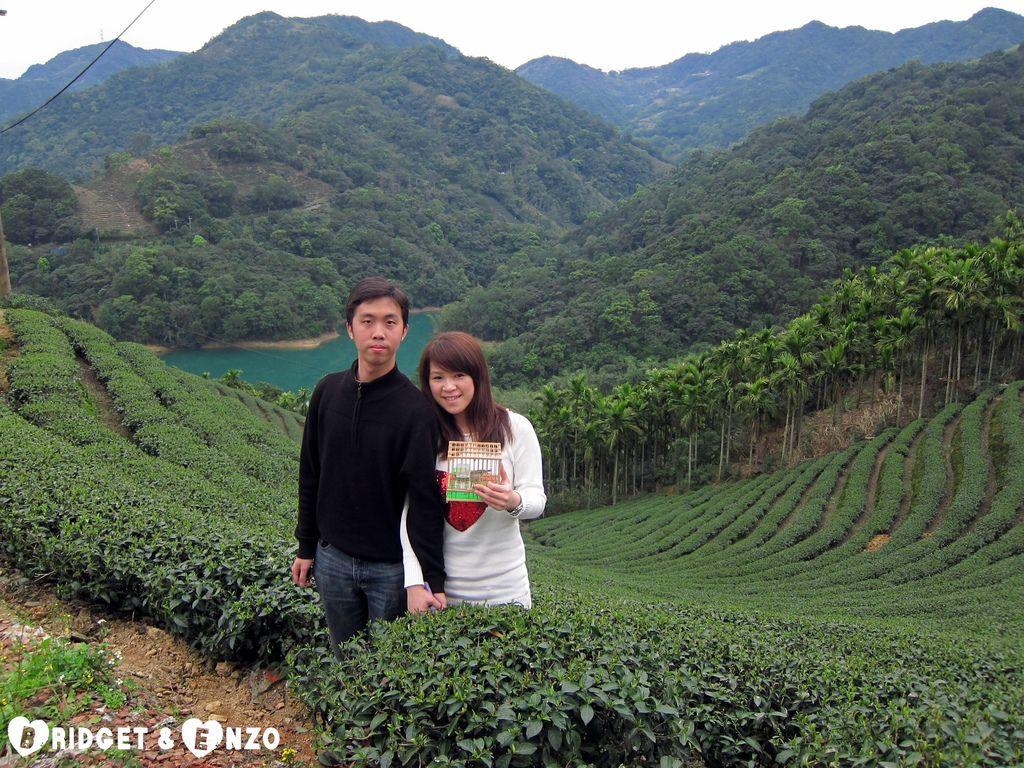 茶園7.jpg