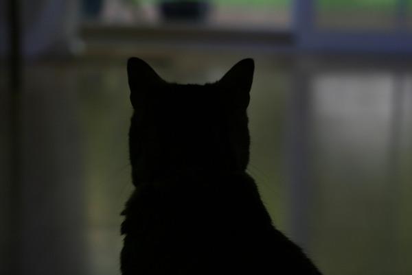 貓背, 姊姊很喜歡這張照片