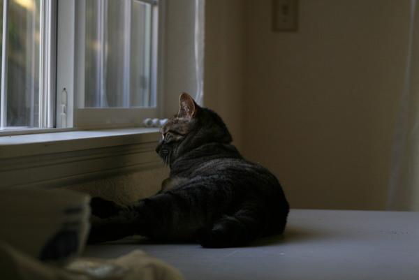 窗邊小憩的貓.......好優雅 好悠閒