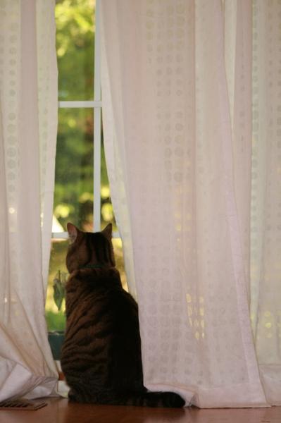 愛娜最愛的窗邊~ 通往後院的落地窗,