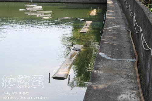 鱉池_3.jpg