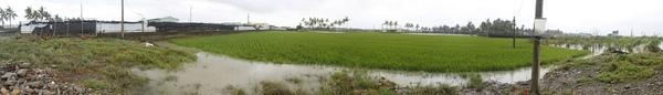 大坵園淹水全景.jpg