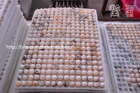 鱉蛋大小種類_11.jpg