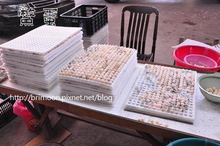 鱉蛋大小種類_12.jpg