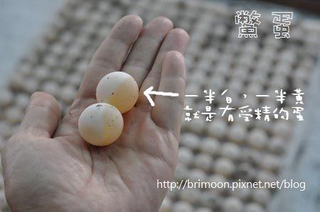鱉蛋大小種類_31.jpg