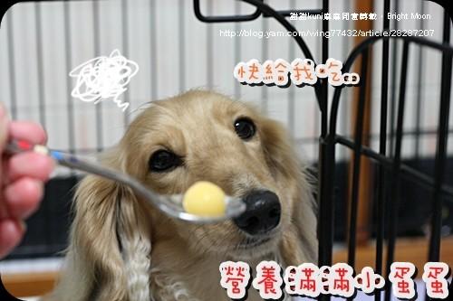 kuni麻麻鱉蛋_10.jpg