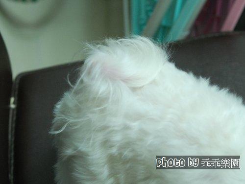 乖乖樂園_09.jpg