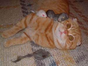 玩老鼠玩具