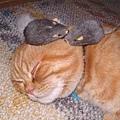 老鼠別吵我