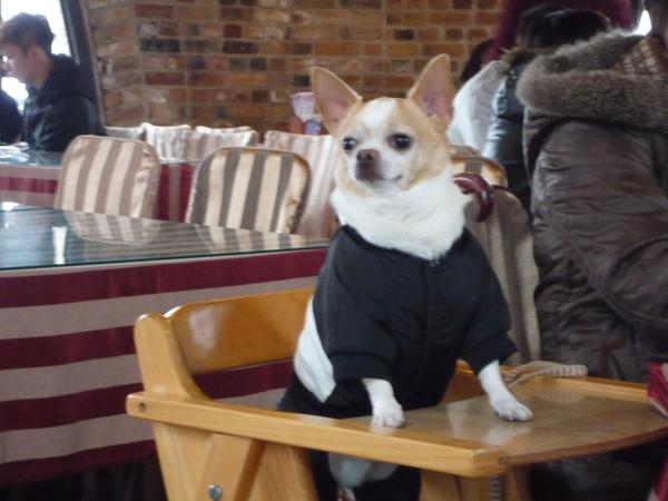 餐廳遇到的狗狗