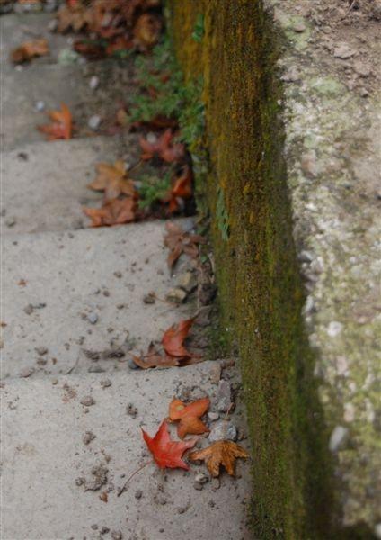 石階旁的靜謐落楓
