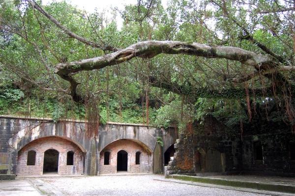 大武崙砲台的洞窟營舍,搭配奇曲古榕,頗有風情