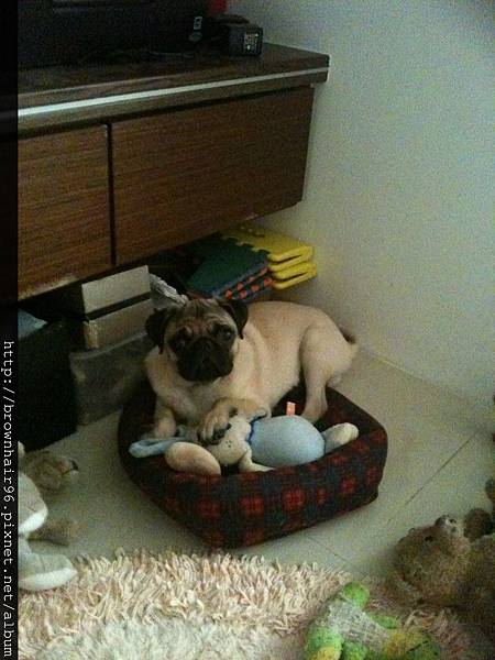 2012.06.25 meepees is too big for his bed