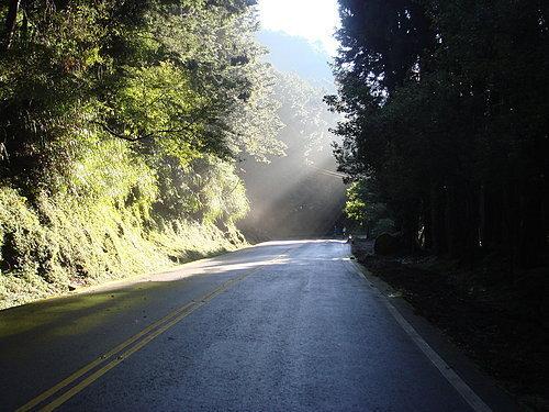 陽光透過枝芽 照亮著我們的道路 為我們帶來一絲的溫暖.jpg