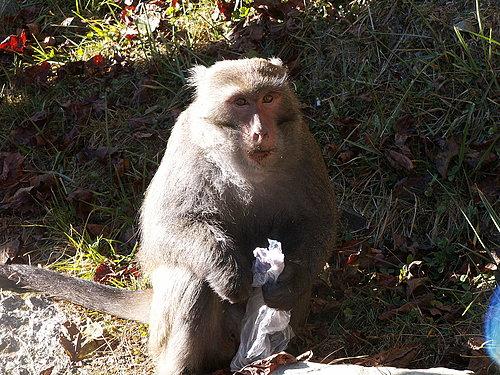請大家有愛心一點 不要拿塑膠帶餵猴子.jpg