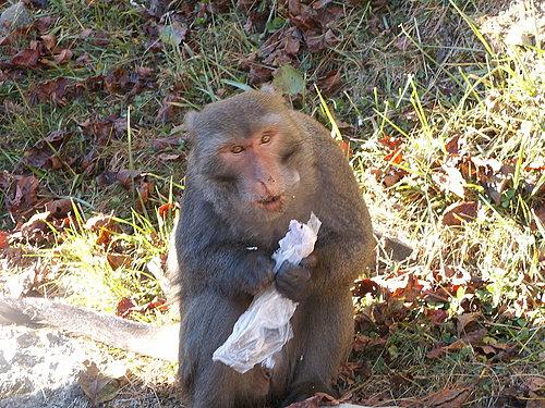 猴子你不要在吃塑膠袋了.jpg