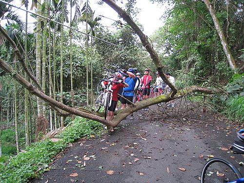 騎乘實況報導 6 樹倒了 檯車通過.jpg