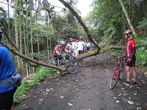 騎乘實況報導 9 樹倒了 檯車通過.jpg