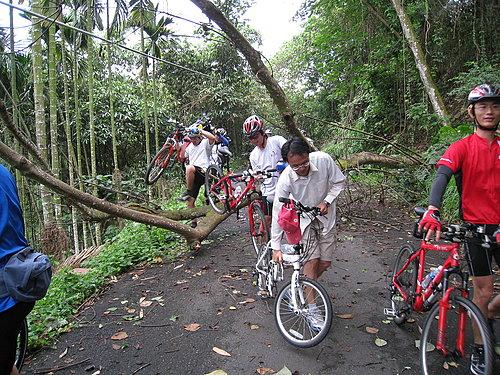 騎乘實況報導 10 樹倒了 檯車通過.jpg