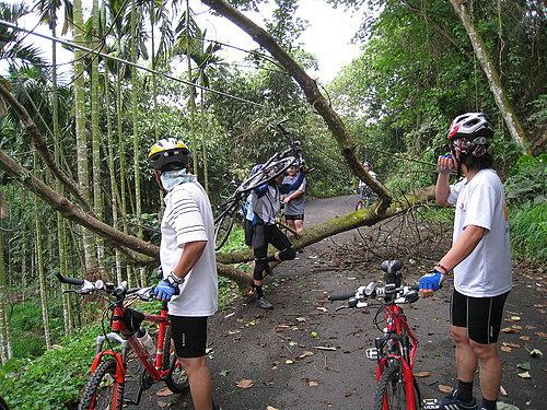 騎乘實況報導 11 樹倒了 檯車通過.jpg