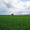 同一角度拍攝 因為天空雲朵的變化 而產生不同的景觀 1.jpg