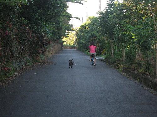 池上鄉大波池自行車道1.jpg