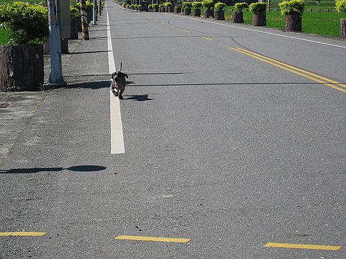 池上鄉大波池自行車道18.jpg