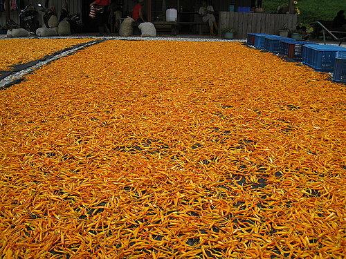 金針菜分為鮮食和乾製品.jpg