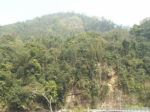 遠處的山頭 一片翠綠.jpg