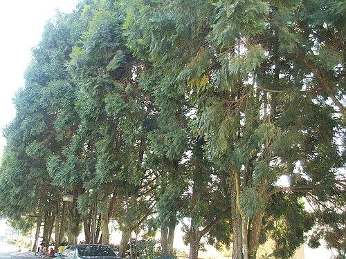微風輕撫著 樹影搖曳著 小朋友就在樹底下上課 真是棒啊.jpg