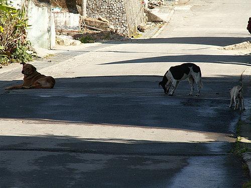 慵懶的狗狗.jpg
