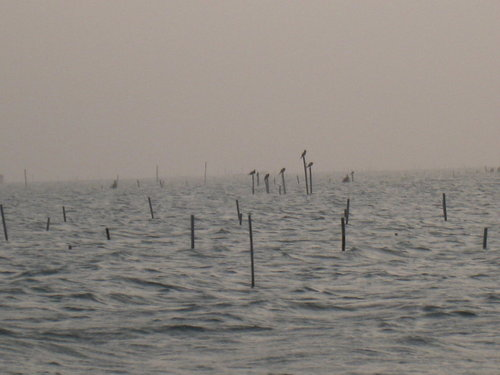 七股瀉湖1.jpg