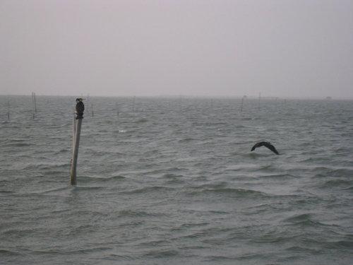 七股瀉湖23.jpg