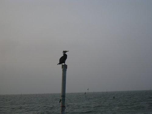 七股瀉湖25.jpg