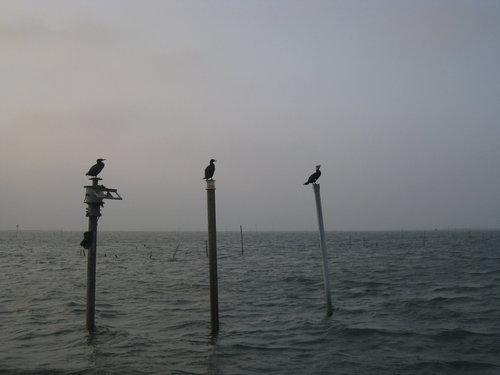七股瀉湖26.jpg