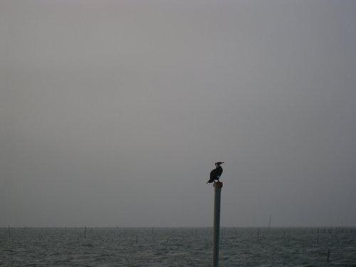 七股瀉湖27.jpg