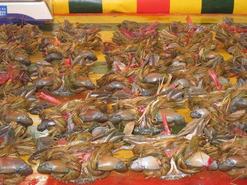 嘉義布袋魚市8.jpg