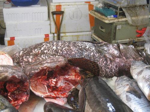 嘉義布袋魚市21.jpg