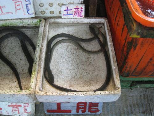 嘉義布袋魚市34.jpg