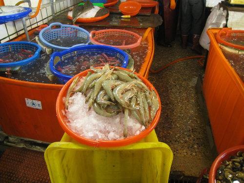 嘉義布袋魚市47.jpg