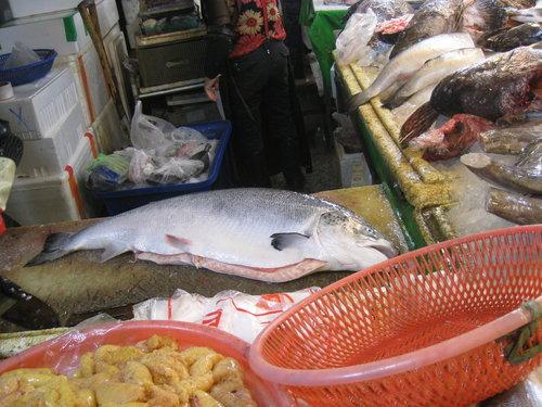 嘉義布袋魚市70.jpg
