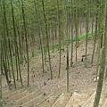 竹山天梯20.jpg