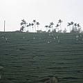 竹山天梯46.jpg