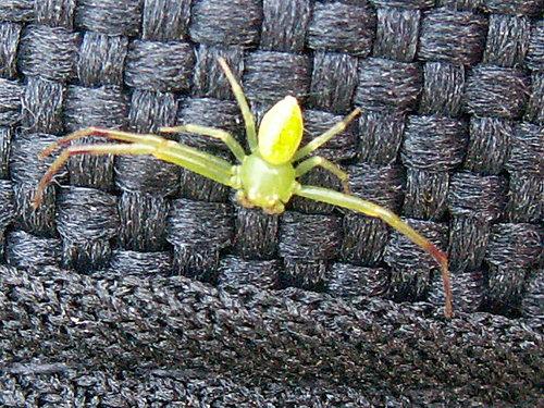 漂亮吧! 綠色的蜘蛛.jpg